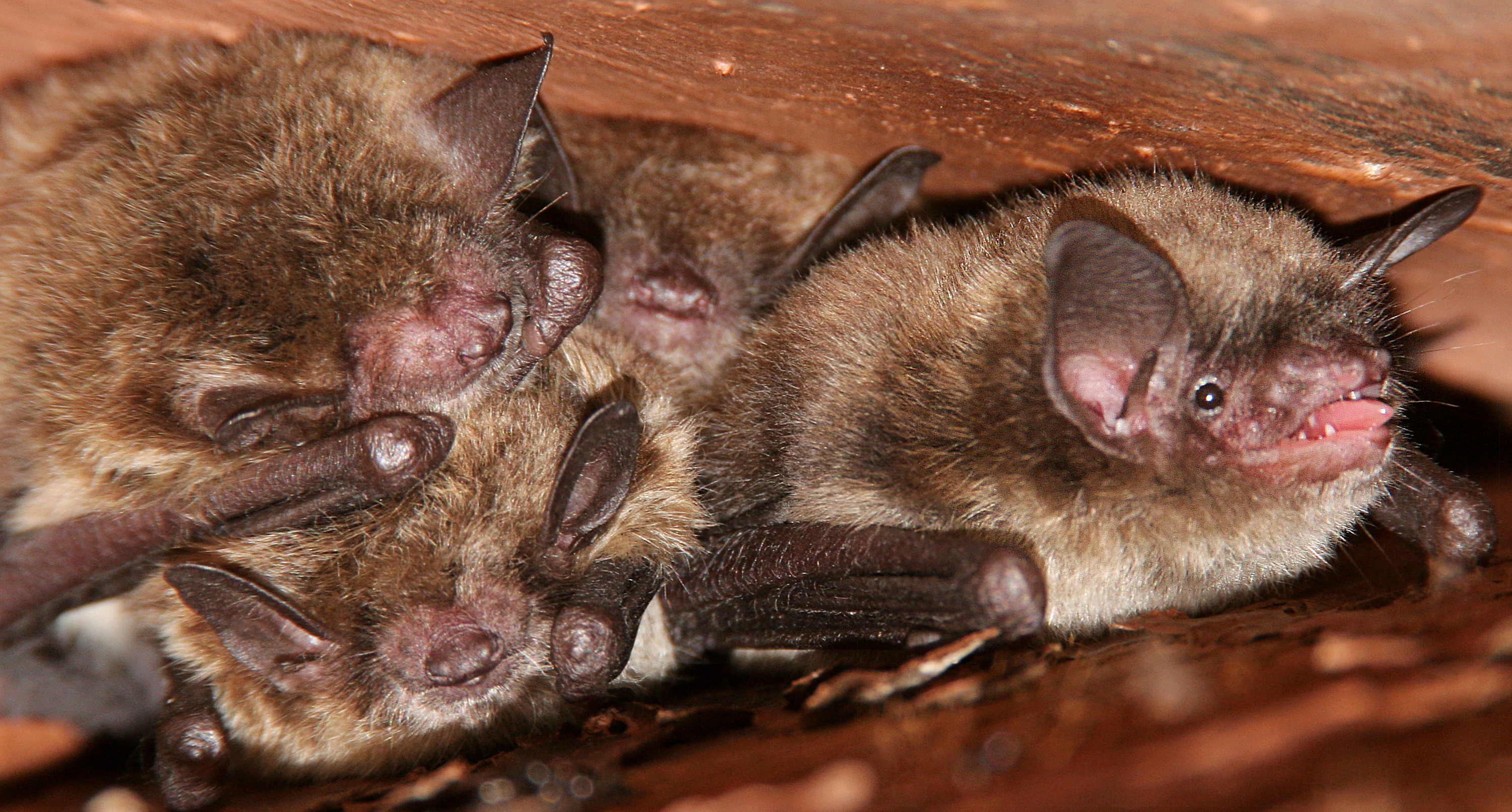 bats in attic in alexandria va is also a very common problem that our company gets calls for on a daily basis alexandria va is located in the tidal river